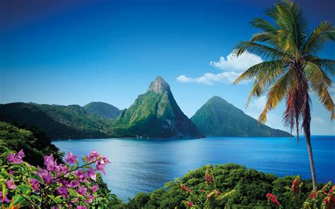 St Lucia Villa & Apartments   Fleewinter