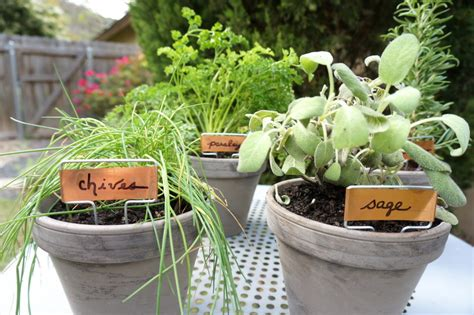 table top herb garden an easy tabletop diy herb garden