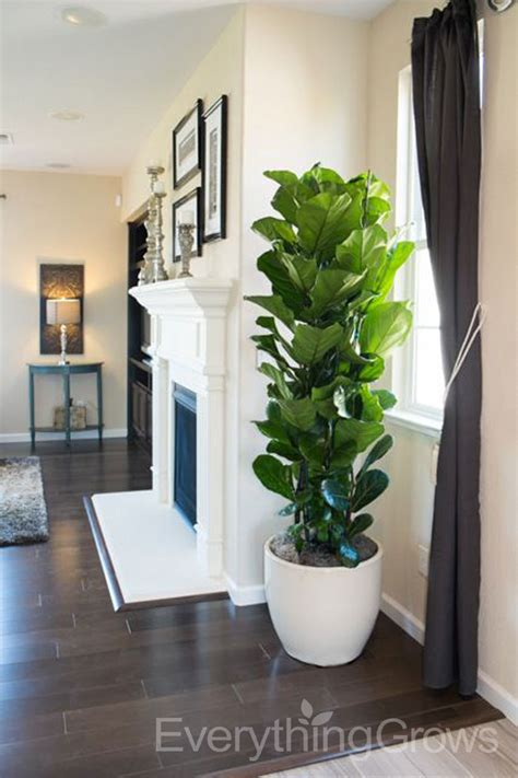indoor plant design interior landscaping by everything grows