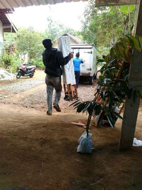 Jual Bibit Jagung Unggulan new wa 0812 8560 4125 jual bibit durian pendek