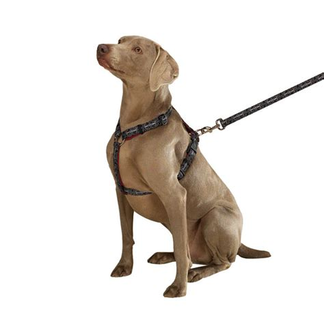 puppy harness 30 harness ideas for large puppy fallinpets