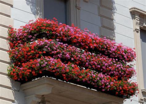 immagini di balconi fioriti caserta eventi e sagre concorso quot balconi fioriti quot a
