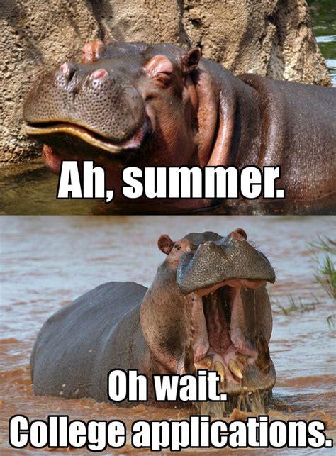 Hippo Meme - california community college enrollment and survival