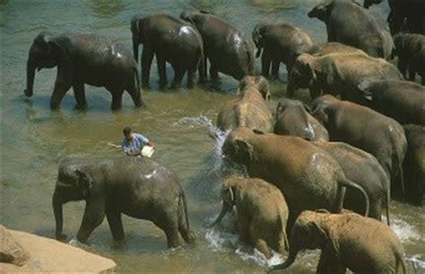 Draco Tavern elephants wish for draco tavern science