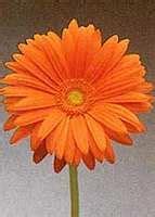 Pupuk Bunga Hebras ata malau macam macam bunga