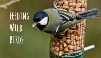 garden birds how to feed attract them to your garden