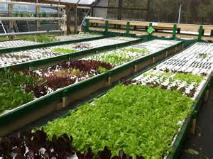 Aquaponic Grow Beds Commercial Aquaponic Farming How It Is Possible To