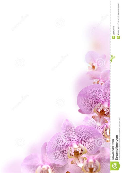 orchideen gestell orchid border stock images image 35562034