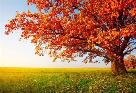 pretty walls download beautiful trees hd wallpapers free combien de feuilles de papier fait on avec un arbre le
