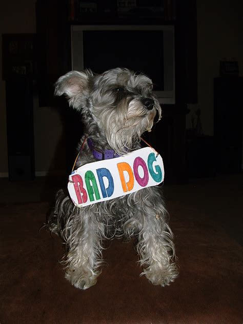 dogs bad for you bad behavior in dogs welcome to your pet space