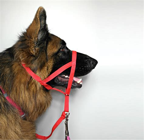 for dogs halti harness for dogs