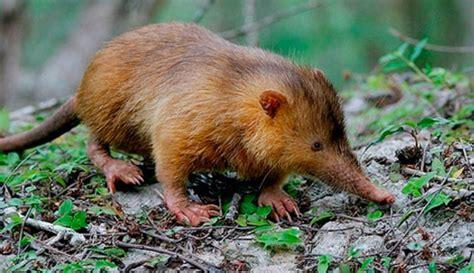 imagenes de animales feos del mundo galer 237 a de im 225 genes los animales m 225 s feos del mundo