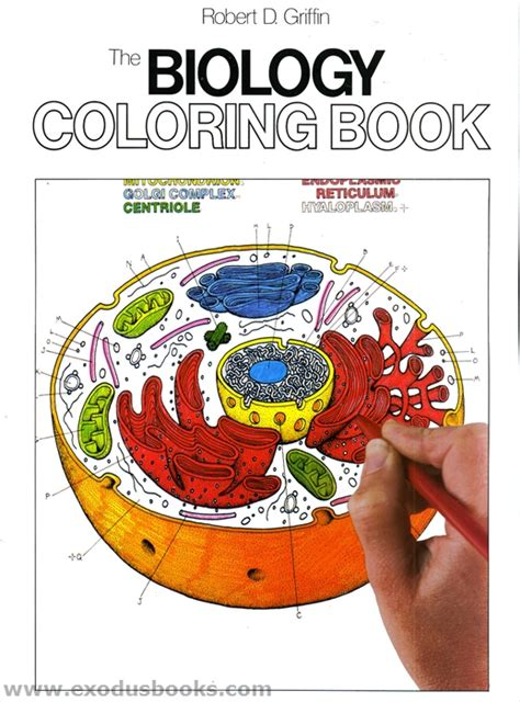 anatomy and physiology coloring book 10th edition answers biology coloring book exodus books