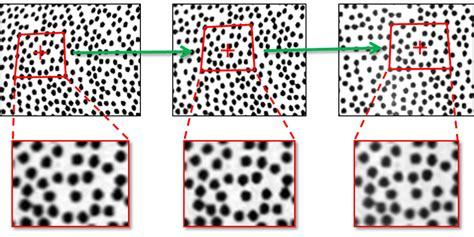 pattern image correlation 2d 3d stereo dic digitital image correlation