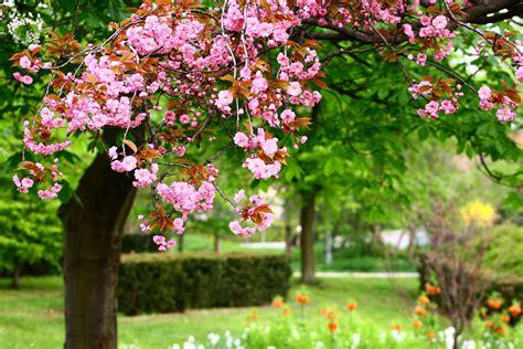 Flowers Garden Image Flower Garden Blossoms Wallpaper 3840x2560 176822 Wallpaperup