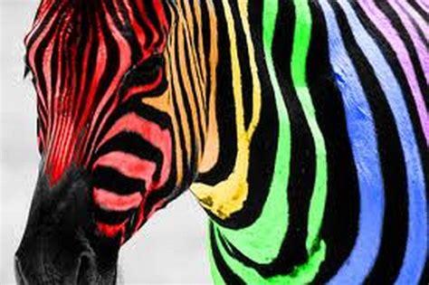 colorful zebra wallpaper neon zebra wallpaper www pixshark com images galleries