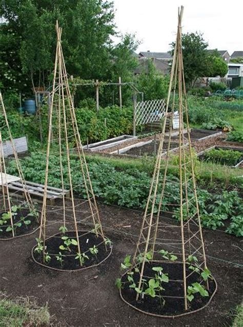 How To Build A Pole Bean Trellis build this pole bean trellis