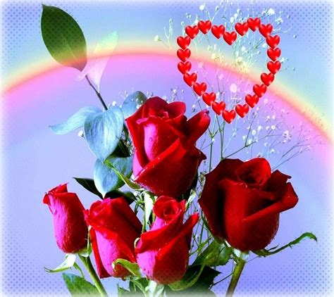 imagenes de rosas rojas para facebook ramo de rosas de amor las mejores imagenes romanticas de