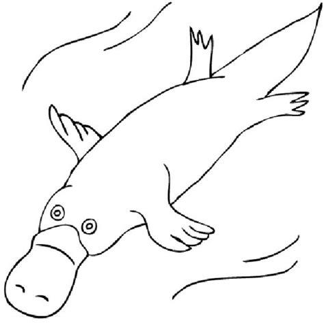 platypus clipart 52 cliparts