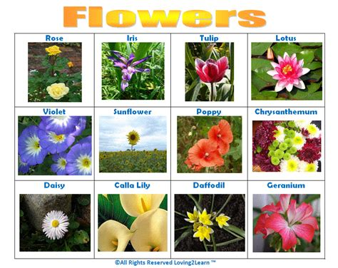 printable list of edible flowers print off this quot flowers quot chart www loving2learn com