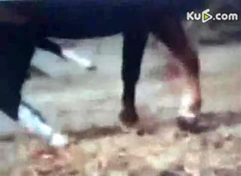 人与驴在线vod视频i观看哪些角色还没|vod和i