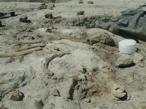 the bone bed the bone bed picture of dinosaur provincial park