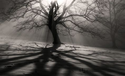 Shadow And Light by Light And Shadow Egon Kronschnabel Photography Digital