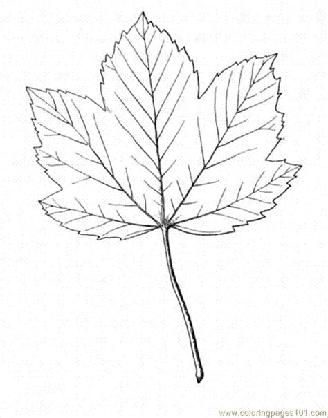 coloring page of maple tree sugar maple coloring page az coloring pages