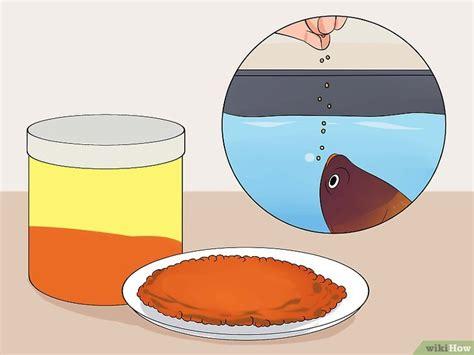 Makanan Ikan Cupang Lalat 6 cara untuk menyelamatkan ikan cupang yang sekarat wikihow