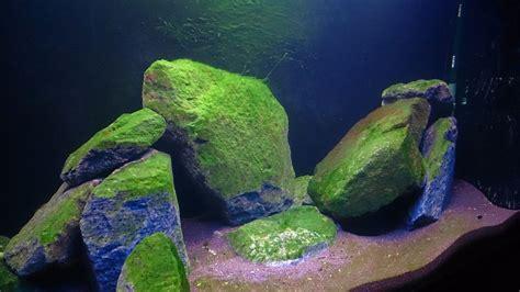 licht im aquarium 6381 licht im aquarium zu wenig licht im aquarium fische