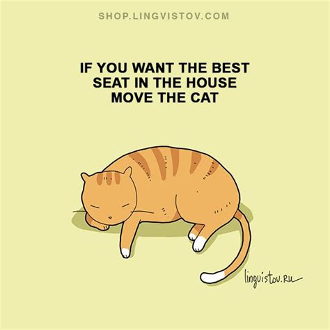 3244 best cat memes images on pinterest kitty cats