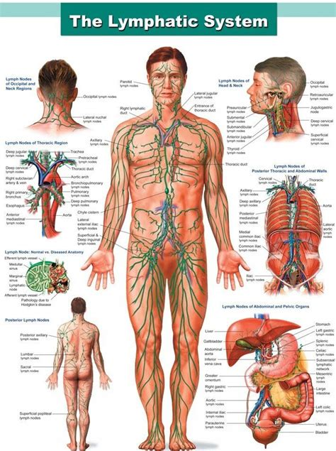Detoxes For With Autoimmune Diseases by 56 Best Parts Affected By Autoimmune Diseases Images