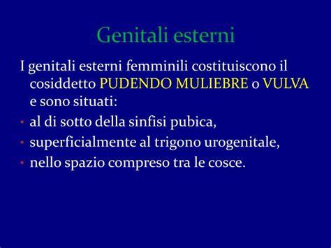 apparato genitale femminile interno ppt anatomia dell apparato genitale femminile powerpoint