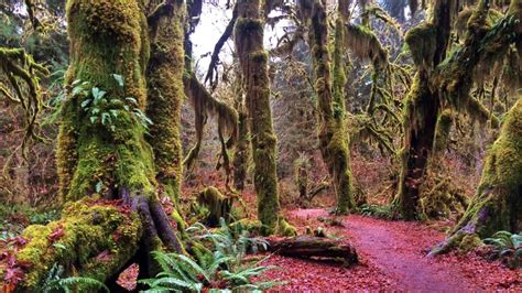 Best Home Design Software Free Trial landscape photography washington s olympic national park