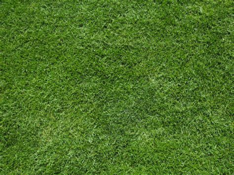 pattern photoshop grass 18 grass patterns free psd ai vector eps format