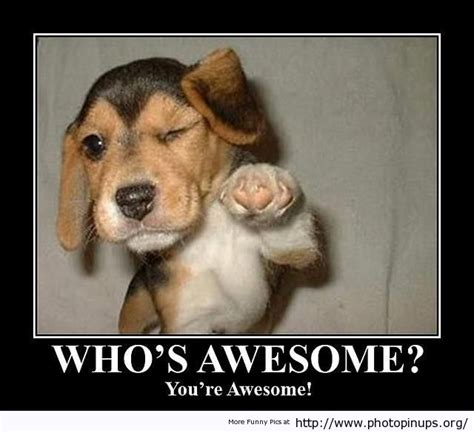 Fucking Awesome Meme - whos awesome your awesome photo pin ups