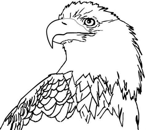 sea eagle coloring page free bald eagle coloring pages az united states on drawn