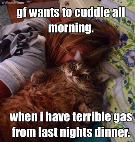 Cuddle Meme - gf wants to cuddle cat meme cat planet cat planet
