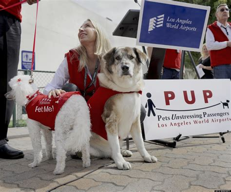 therapy dogs for anxiety lax airport therapy dogs aim to de stress los angeles travelers with wags