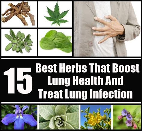 15 best herbs that boost lung health and treat lung