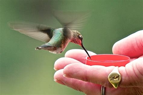 hand feeding hummingbirds nikon pro dx slr d500 d300