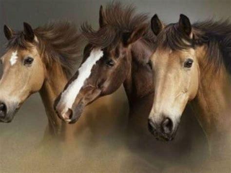 wallpaper horse free download wild horses wallpapers wallpaper cave