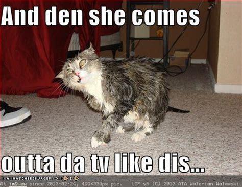 Wet Cat Meme - cat funny wet cat