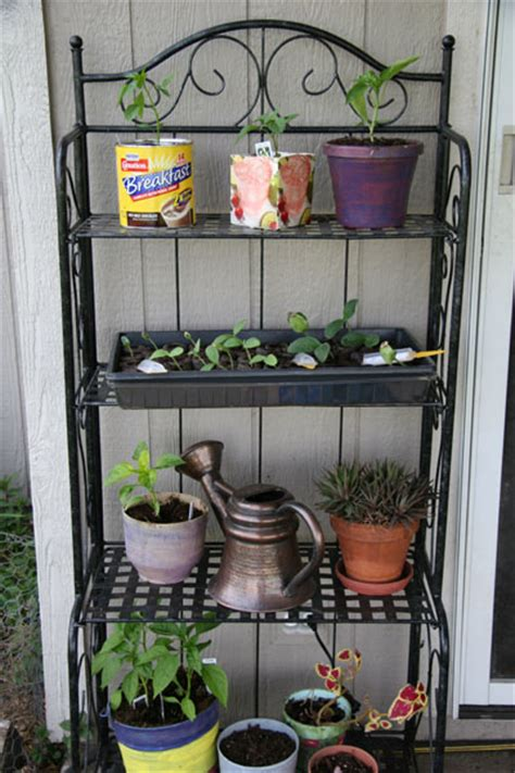 container gardening for dummies 7 easiest ways to start container gardening for dummies