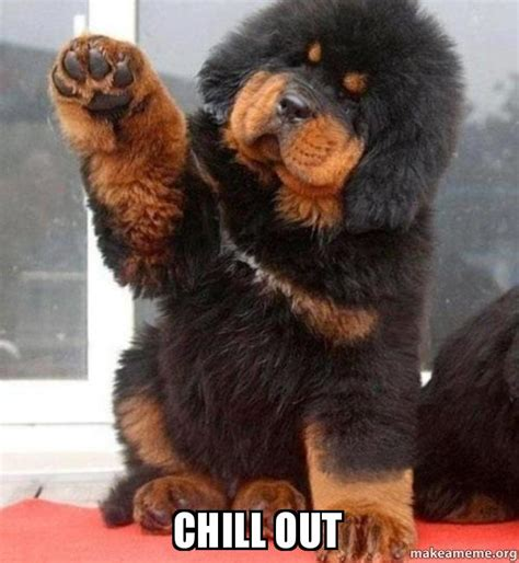 Chill Out Meme - chill out make a meme