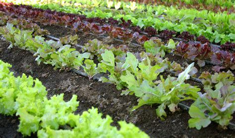 Permalink to backyard organic garden business – Home Backyard Vegetable Garden Royalty Free Stock Photos   Image: 36074028