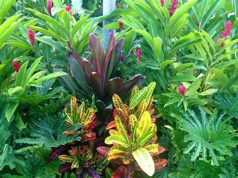tropical garden inspiration dwarf red ginger cordyline