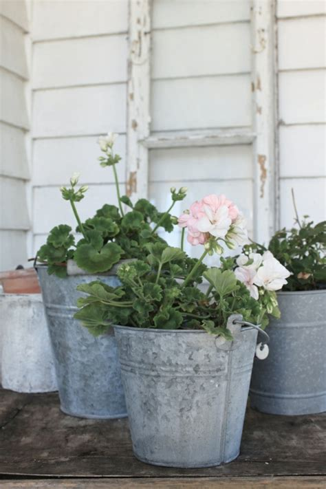 pflegeleicht gartenpflanzen preview