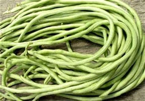 Tanaman Sawo Cm 19 Tinggi 40 60 Cm kumpulan budidaya budidaya kacang panjang