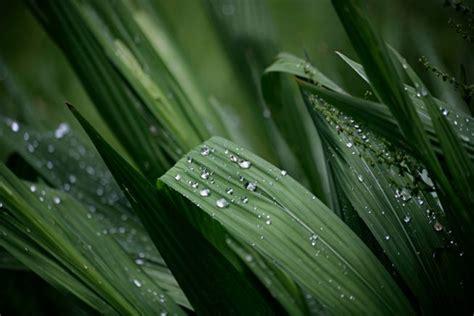 woran kann es liegen wenn die hupe nicht funktioniert montbretien 187 pflanzen pflegen vermehren und mehr
